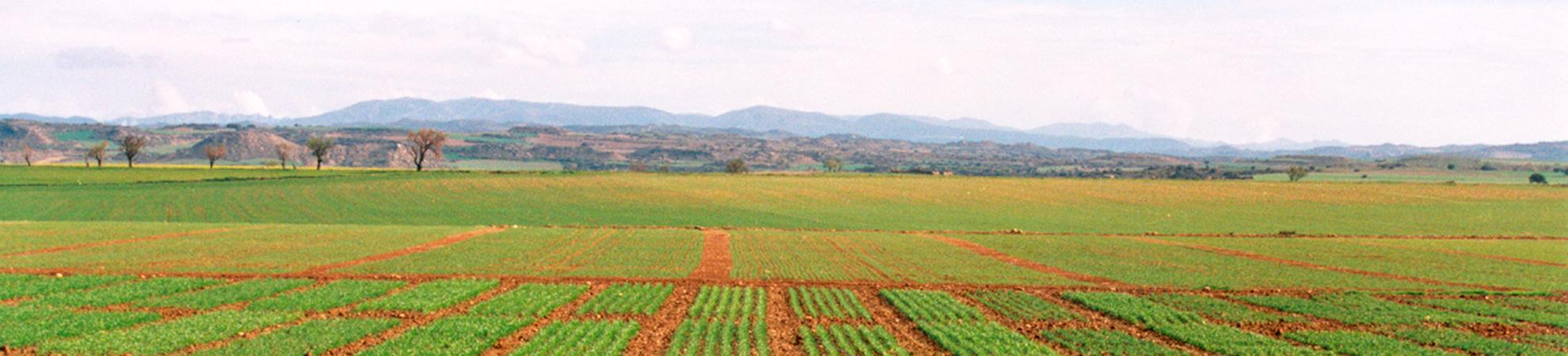 ATRIA: Agrupación para Tratamientos Integrados en Agricultura